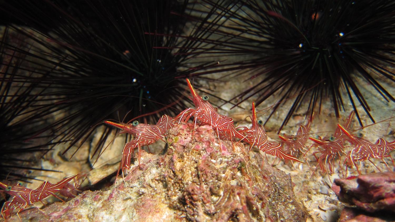 Durban Dancing Shrimps by pegamedia.com